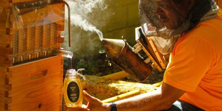 Puntacana Forest Honey - Dominican News