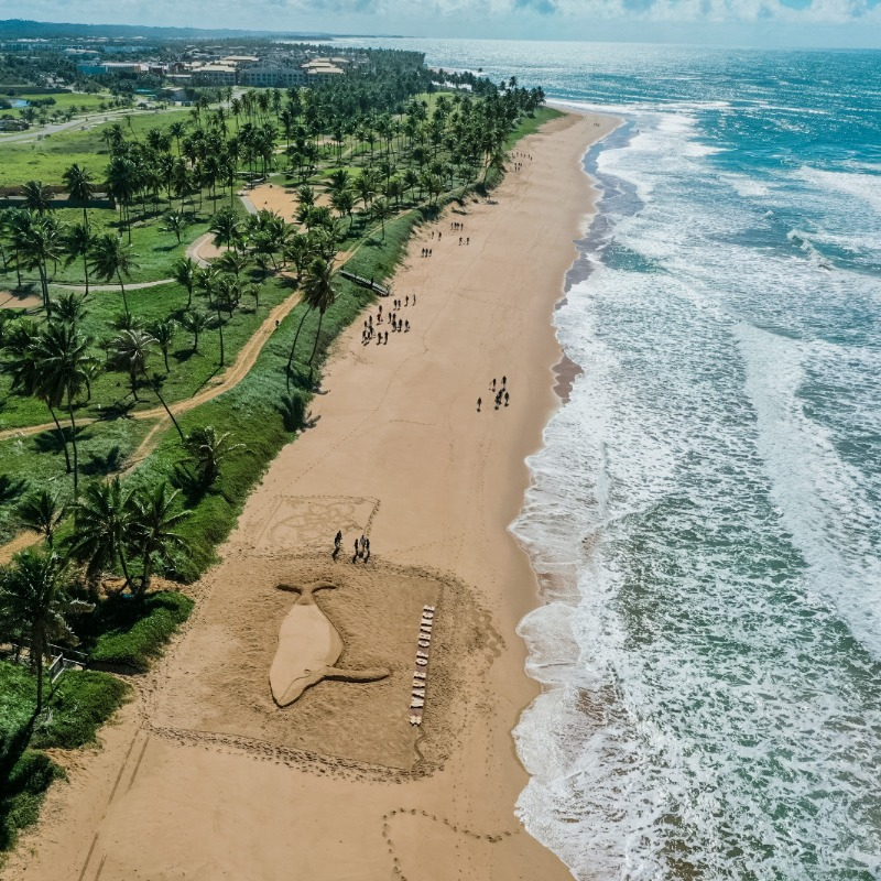 Iberostar Group celebrates Oceans Day and launches coastal ecosystems campaign - Dominican News 2